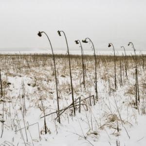 Zemplen.Zima 2010/11/  MAGDA CISZEWSKA RZĄSA